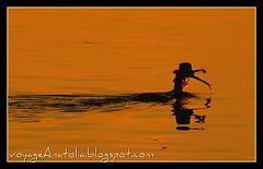 Voyage Anatolia.blogspot.com en Flickr