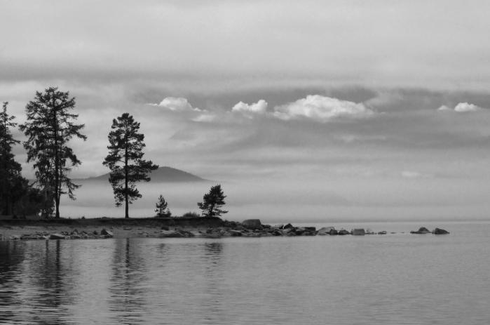Tammisto en Flickr